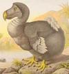 Extinctdodobird
